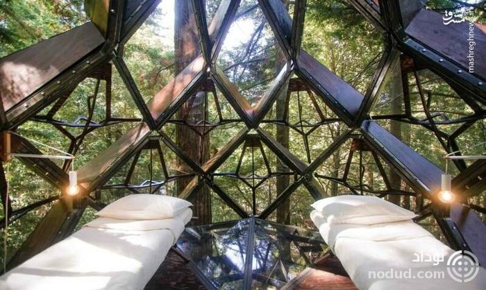 تصاویری از یک خانه درختی عجیب!