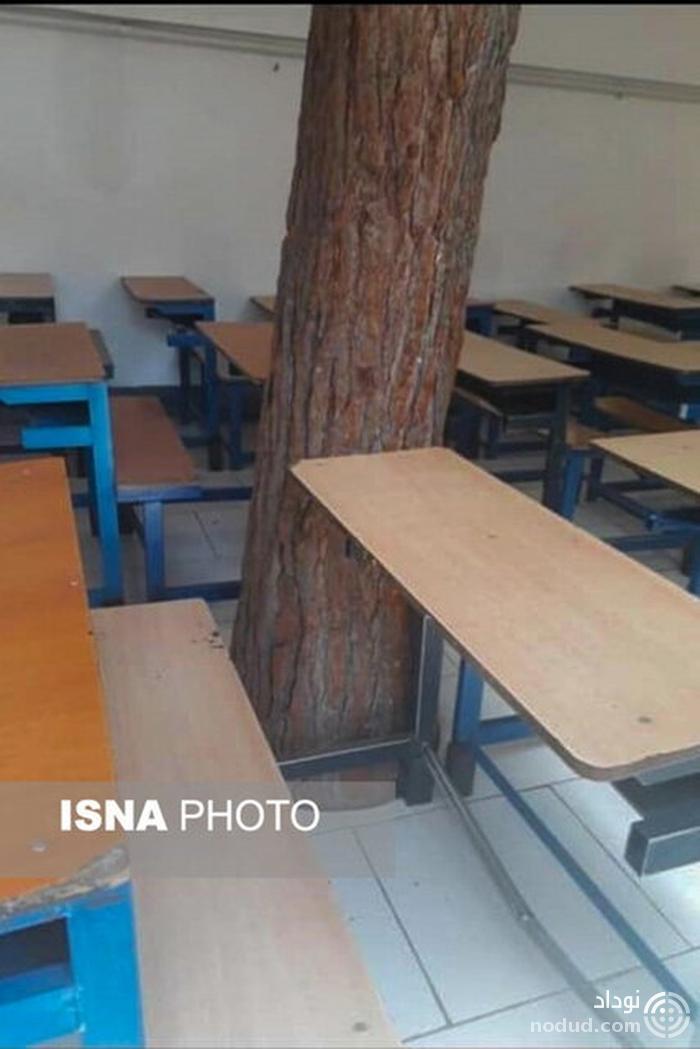 درختی که با دانش آموزان درس می خواند