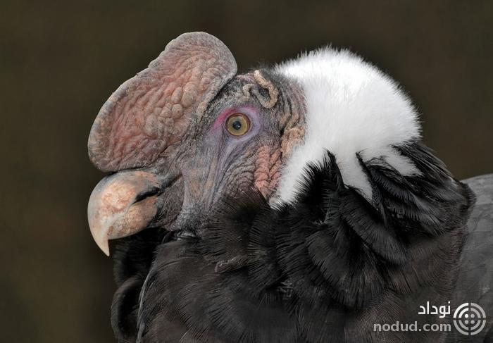 پرنده های عجیبی که شبیه آدم فضایی ها هستند + تصاویر