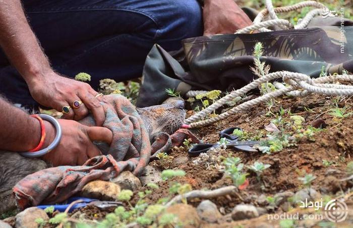 عکس /  نتیجه انداختن زباله در حیات وحش