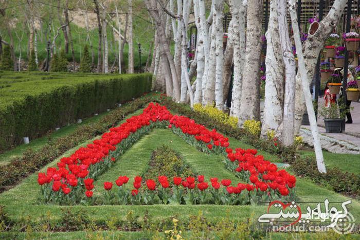 لاله های باغ گلهای کرج