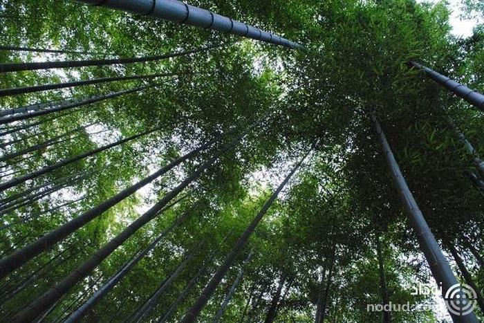 جنگل ملی بامبوی آنجی (Anji Grand National Bamboo Forest)
