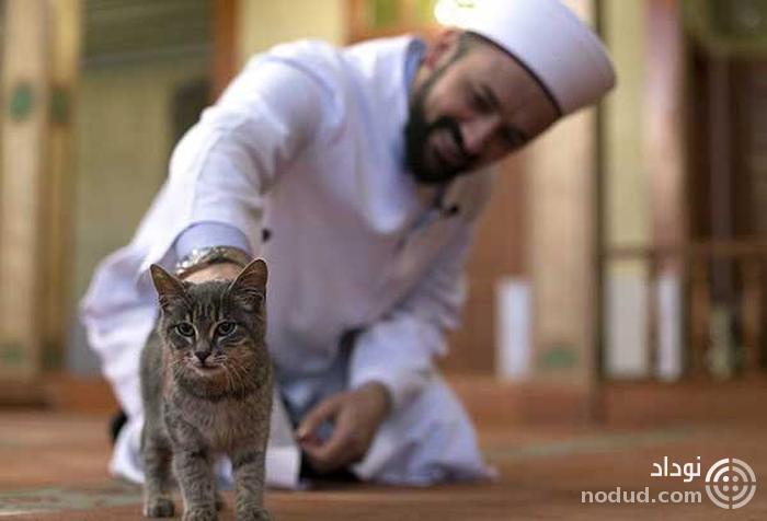 مسجدی برای گربه ها در استانبول