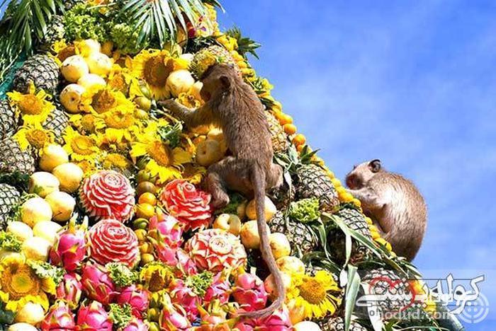 مهمانی میمون Lopburi