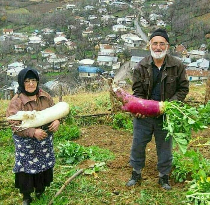 محصول کشاورزی