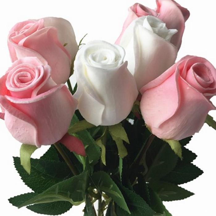 خرید گل رز هلندی